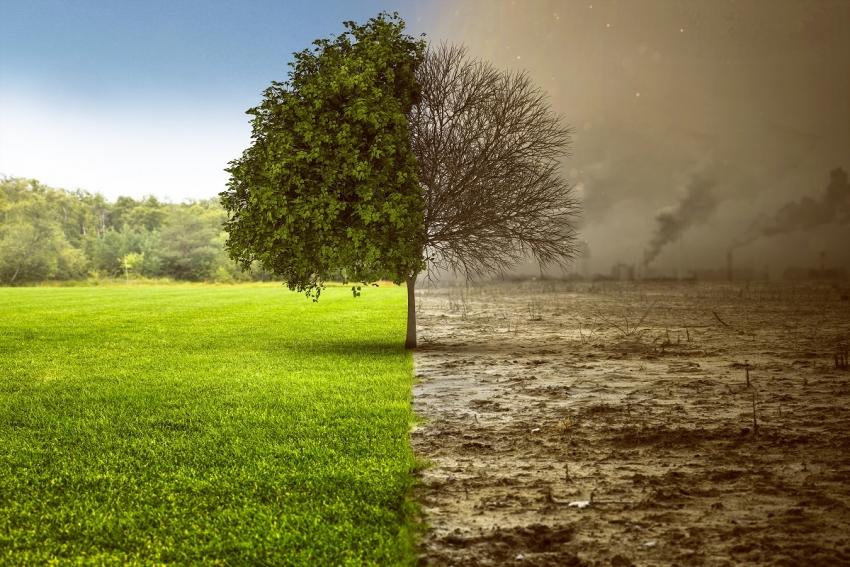Ce impact au avut masurile de carantina asupra mediului