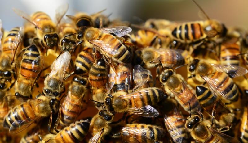 4 albine si-au facut ''stupul'' in ochiul unei femei