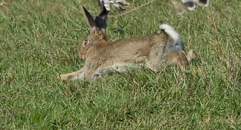 A FOST DAT STARTUL SEZONULUI DE VINATOARE: CE PASARI SI ANIMALE POT FI VINATE