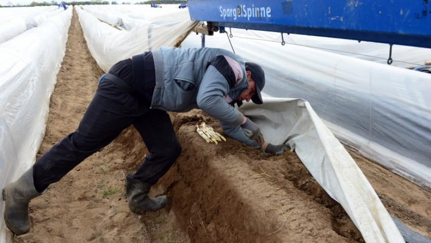 Un fermier austriac risca inchisoarea, dupa ce autoritatile au aflat cu cit isi platea muncitorii romani si sirbi