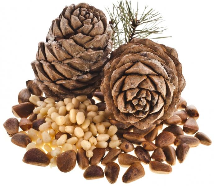 Beneficiile și prejudiciile de nuci de pin pentru bărbați și femei: cum să aplici - Cereale