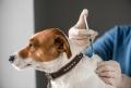 Rusii au facut primul vaccin anti-COVID pentru animale