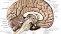 CINCI OBICEIURI ZILNICE CARE ITI DISTRUG IQ-UL