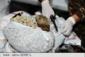 Captură record de heroină la frontiera Republicii Moldova