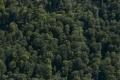 Harta padurilor virgine din Romania: 300.000 de hectare, 13.000 de specii si cea mai mare populatie de ursi din Europa/VIDEO