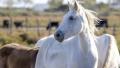 Ritualuri groaznice asupra cailor in Franta
