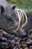Atlasul creaturilor ciudate: 13 animale despre care nu stiai ca exista