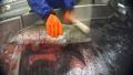 """""""Pot pestii sa simta durere?"""" Cruzimea extrema la o pescarie ar putea duce la deschiderea primului caz impotriva abuzului fata de pesti"""