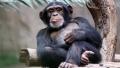 CELE MAI INTELIGENTE ANIMALE DE PE PLANETA