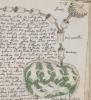 Manuscrisul Voynich, cel mai straniu document descoperit vreodata