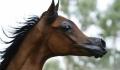 In urma incrucisarii excesive a raselor, o ferma din SUA a creat un cal care pare scos din desenele animate