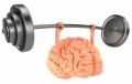 Oamenii de stiinta au descoperit metoda care poate imbunatati functiile cognitive: creierul reintinereste cu pina la 10 ani