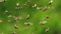 Un american a murit dupa ce a fost atacat de un roi de albine ucigase in timp ce tundea iarba