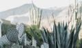Fiind inspirati din viata de desert, cercetatorii sunt pe cale de a rezolva problema apei potabile