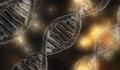 Omenirea inca evolueaza, dar cercetatorii nu inteleg motivul ce sta la baza procesului