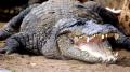 Autoritatile australiene au salvat mai multi imigranti pierduti intr-o zona impinzita de crocodili si serpi