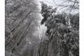 NINSORILE AU AFECTAT FONDUL FORESTIER NATIONAL