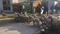 15 oi inscrise la o scoala din Franta pentru evitarea inchiderii unei clase