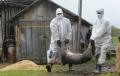 Gasti criminale chineze raspindesc intentionat pesta porcina pentru a face bani