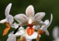 Orhideea – regina plantelor de interior