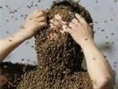 Povestea barbatului care a supravietuit in munti mincind albine si fructe de padure