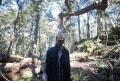 Padurea sinucigasilor, un loc sinistru in care nu ai vrea sa ajungi