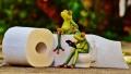 Zece repere din istoria hirtiei igienice