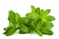 STEVIA, PLANTA CARE TE SCAPA DE VICIILE NESANATOASE PRECUM FUMATUL SI ALCOOLUL