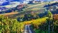 Viticultorii italieni au nevoie de 100.000 de romani pentru recoltare si sunt disperati din cauza carantinei: Platim noi testele