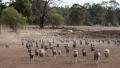 Pedeapsa rara primita de un fermier din Noua Zeeelandă care si-a maltratat sute de oi