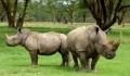 10 lucruri interesante pe care e bine sa le stii despre rinoceri
