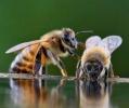 Albinele pot rezolva probleme de matematica