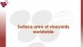 MOLDOVA, PE LOCUL 20! ANUAL PRODUCEM CIRCA 1,7 MILIOANE DE HECTOLITRI DE VIN